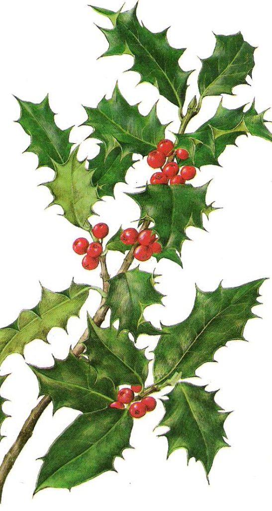 El Acebo es el árbol de la navidad