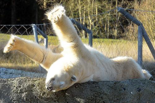 stretch-bear1