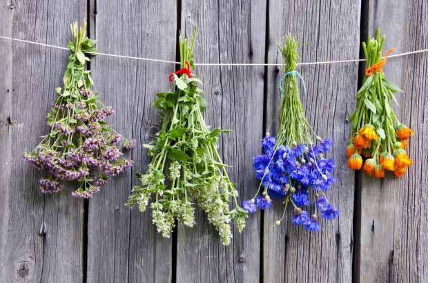 9 hierbas arom ticas y sus remedios naturales for Asociacion de plantas aromaticas