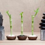 El Feng Shui en el dormitorio: reorienta tu cama y mejora tu vida