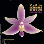 Cómo cuidar y mantener orquídeas phalaenopsis in vitro